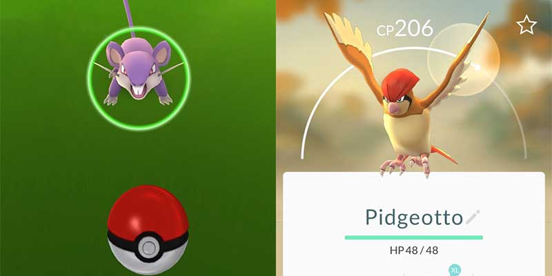 catch common pokemon in pokemon go