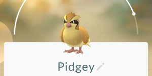 what is pidgey farming